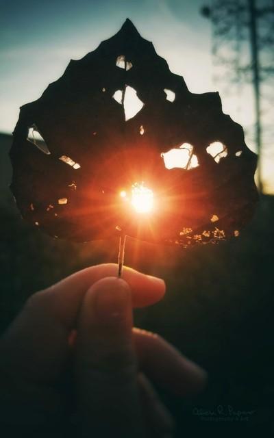 Sunlight Through A Leaf