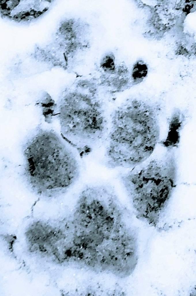 Following my dog's snow track