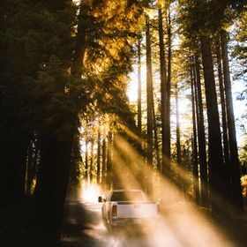 Smokey forests let the sun beams pour through on a drive in the California mountains.