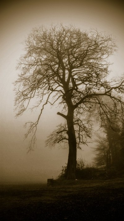Standing Tall In The Foggy Dew