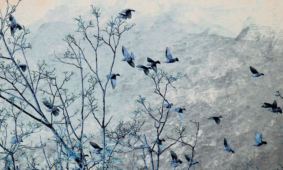 Grackles are so interesting.  They fly in huge flocks as they weave their way through the sky.  T...