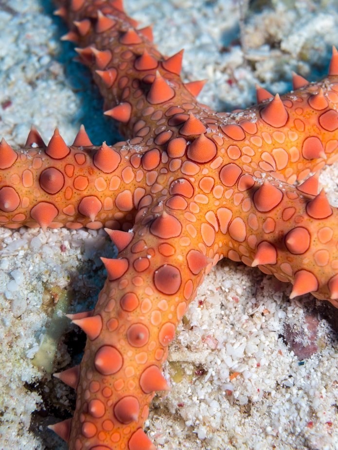 star fish close-up by jgnu - Colorful Macro Photo Contest
