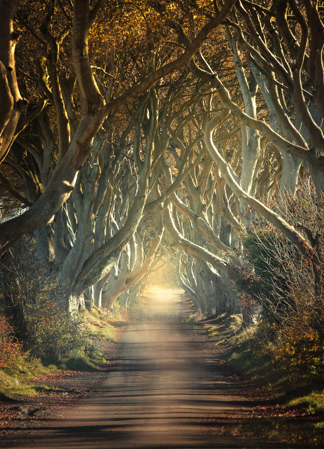 THE DARK HEDGES by Smert - Straight Roads Photo Contest