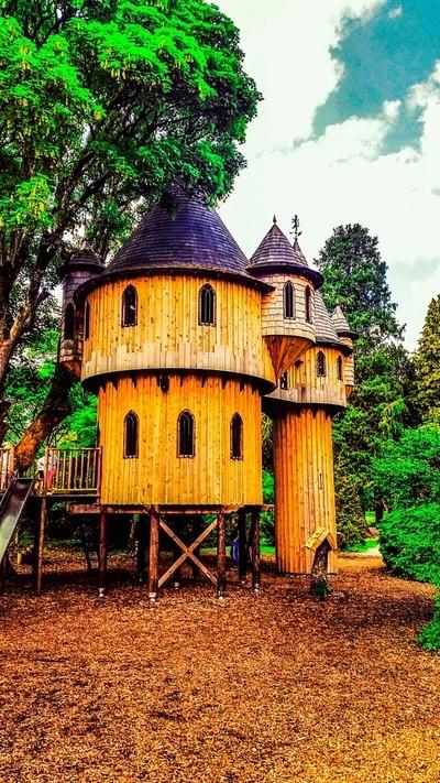 Tree House Of Dreams