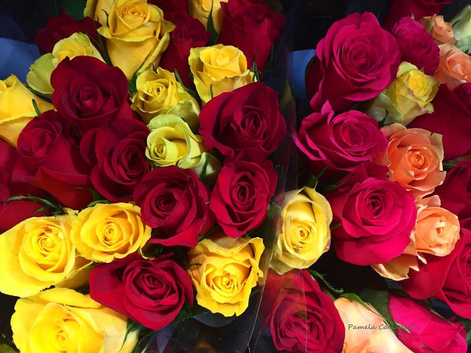 Roses on display