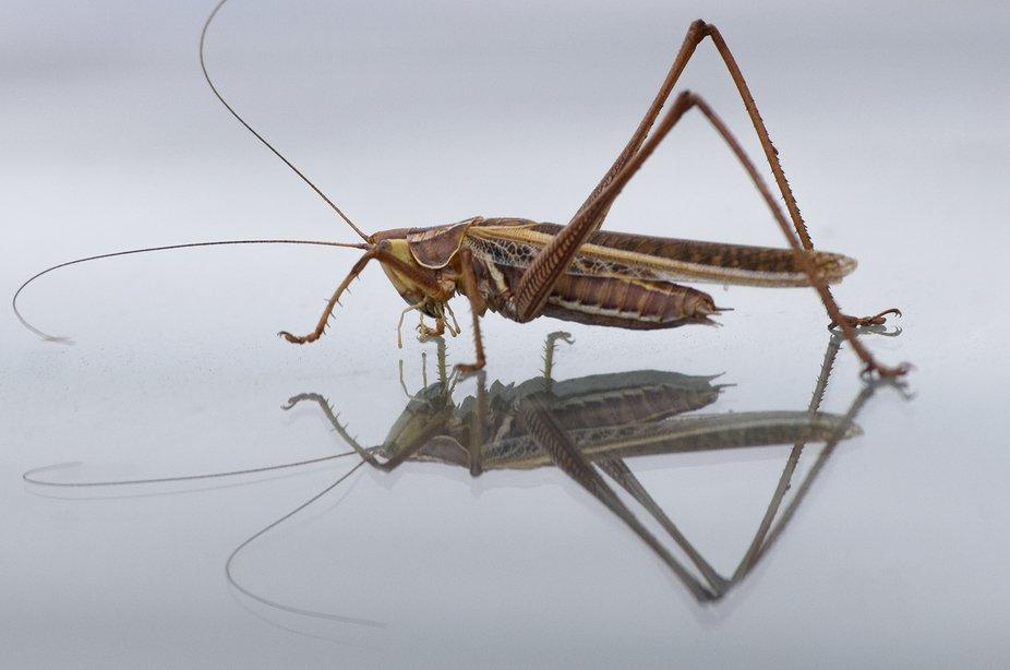 Grasshopper reflection