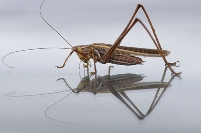 Grasshopper reflection