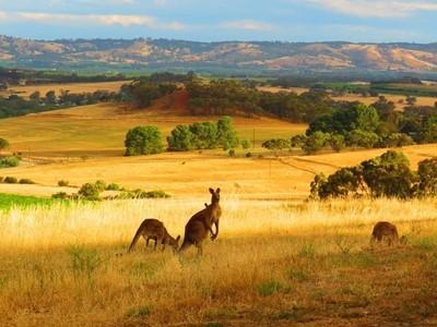 Kanga Country