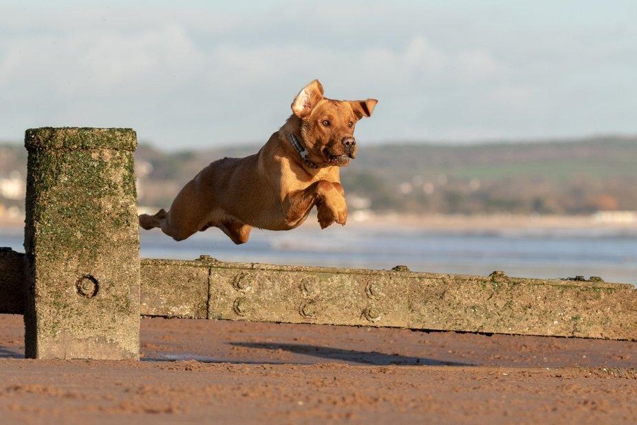 Our boy having great fun with his ball on Dawlish Warren (Devon, England) beach.
