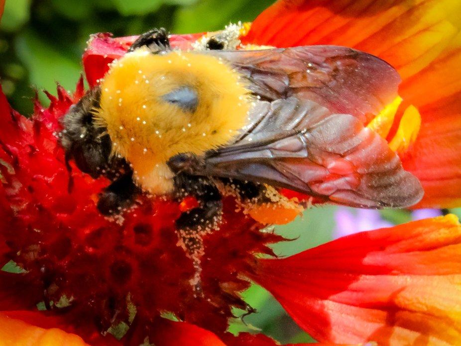 Fire flower Beautiful bee