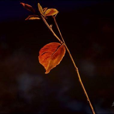 December Crepe Leaf