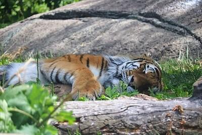 Naptime, Indianapolis Zoo