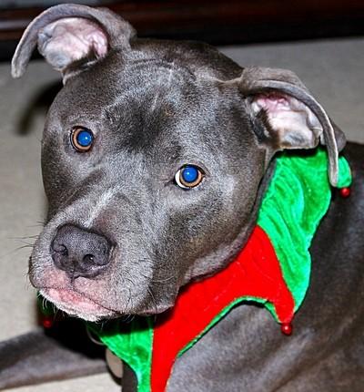 Christmas Jester
