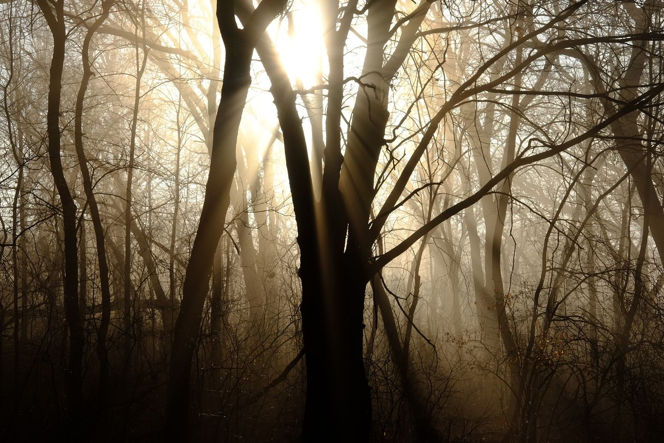 Shot was taken as the morning sun was rising casting rays through the fog.