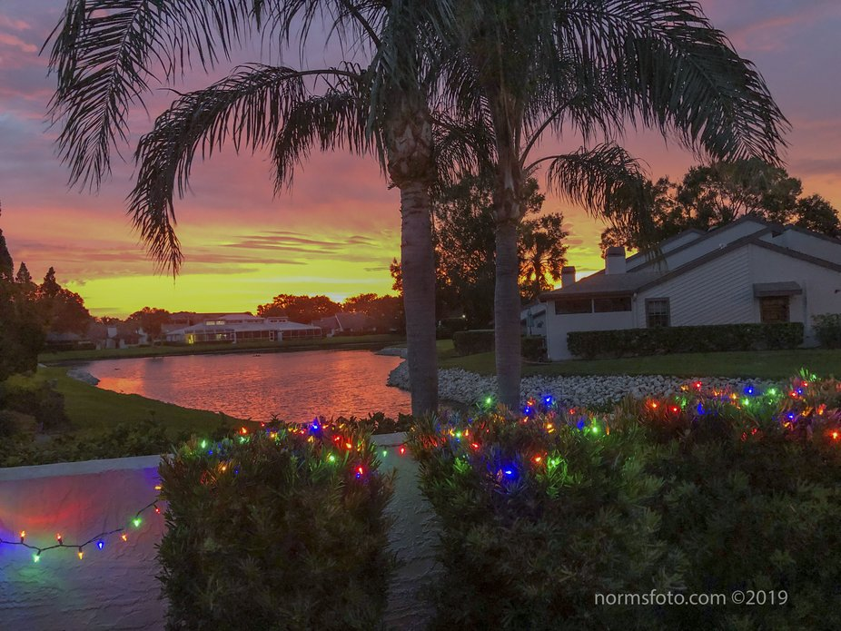 View from my backyard most morning...lucky me ! Beekman Lakes, Sarasota, Florida.