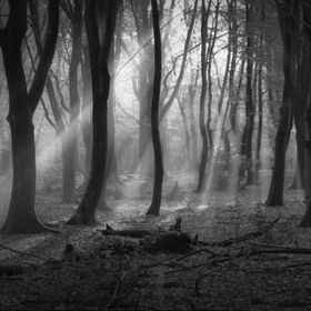 The forest of dancing trees . My impression in B&W.