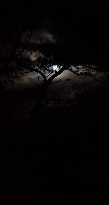 moon rising over the trees