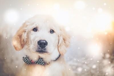 Baby Finn Holiday Snow