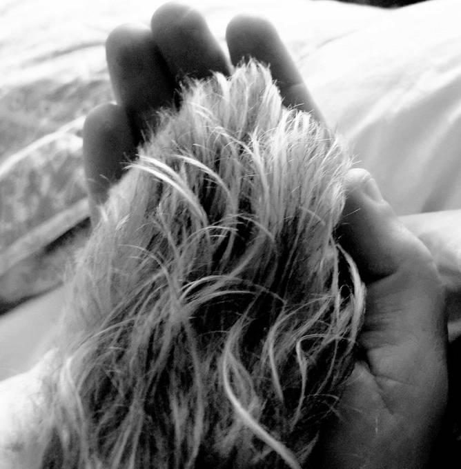 companion hands/paw