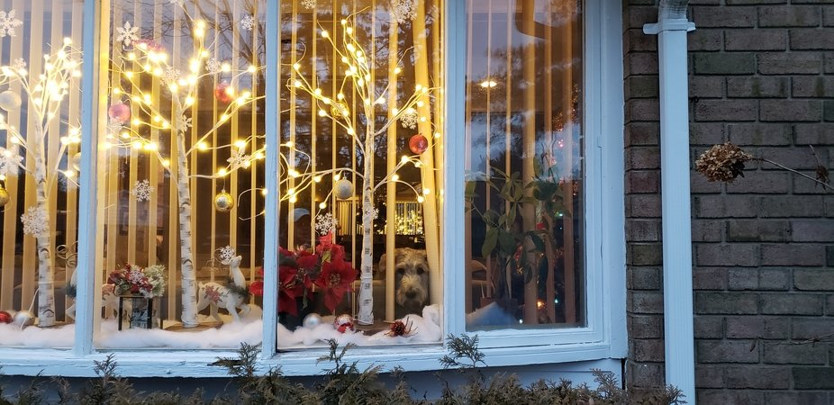 Look at that doggie in the Christmas window