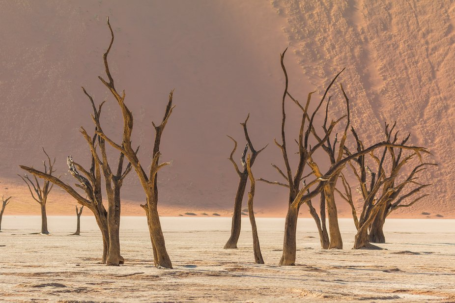 Dead Acacia Erioloba trees in DeadVlei, Namibia.