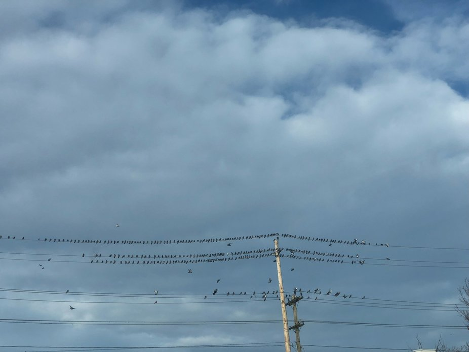 Pegions on wire