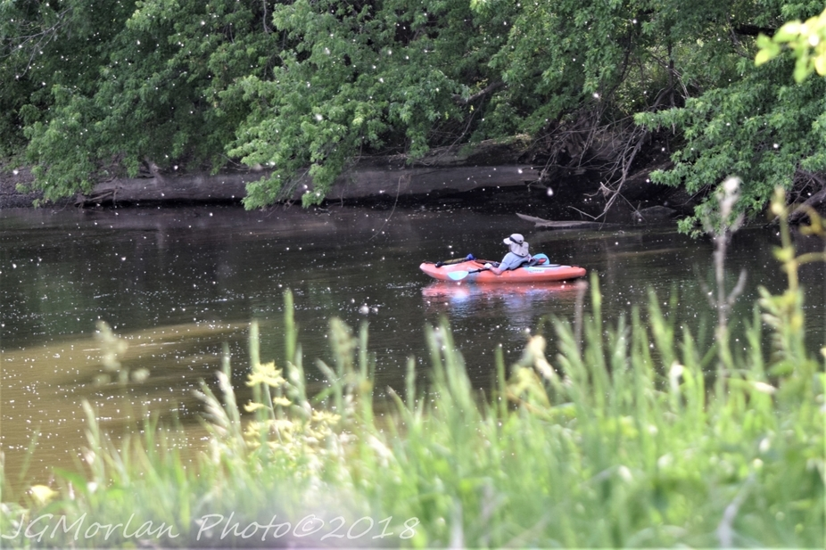 Right temperature.  No wind.  Swift current.  Who needs to paddle?  This kayaker chose to relax and let the river take him wherever it chose.