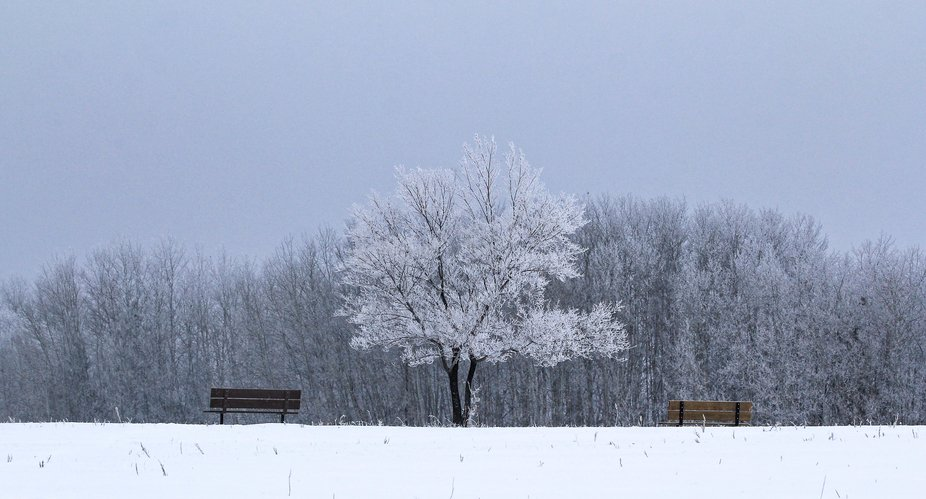 you can't beat a front row seat in this Winter Wonderland! Taken in Manitoba, Canada