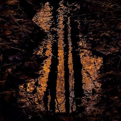 Sunset reflection in the little brook here.  #trailsend #sunset #reflection #lastlight #brook #wander #outthebackdoor #backyardnature #canon_photos #canonglobal #sunset_vision #fotosforyou_rk #ig_eternity #got_greatshots #shot_flair #pocket_reflection #ra