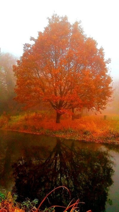 Autumn Colours in the fog