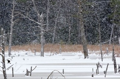 ... My favorite beaver pond in a snowstorm  Concord, NH, USA 11-16-18 . . Canon EOS 7D Mark II, EF500mm f-4L IS II USM (Auto Max 1600) ISO 400, f-6.3, 1-640th Sec., (EFL) 800mm +0.33 Exposure Compensation. Hand Held.  Cropped for Composition. Manual Mode,