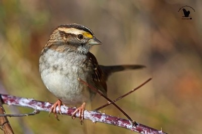 "... 'My Good Side Please' . . A sweet little Sparrow hopped up on a branch near the truck and said ""Hello Mr. Photog"". It made sure to tell me how it wanted to be photographed. . . It turns out my patented Avian Mind Control will allow"