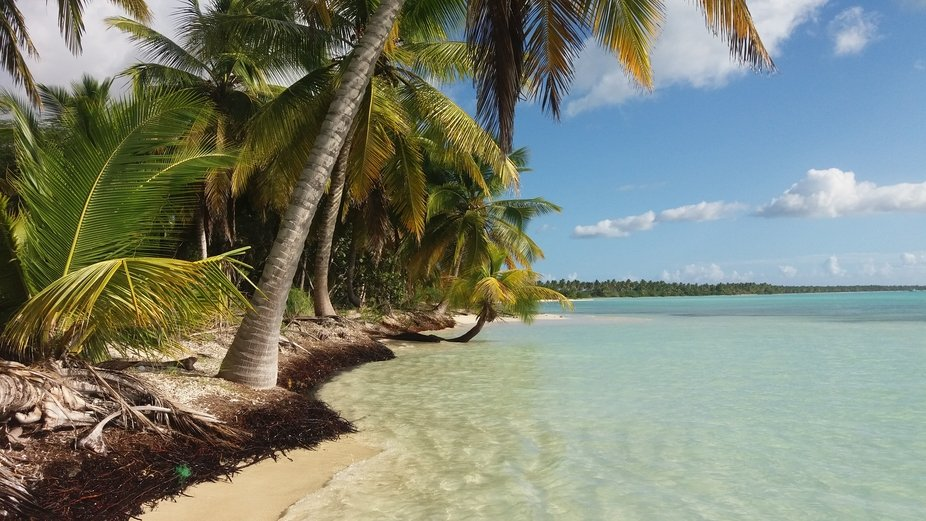 Near the Palms