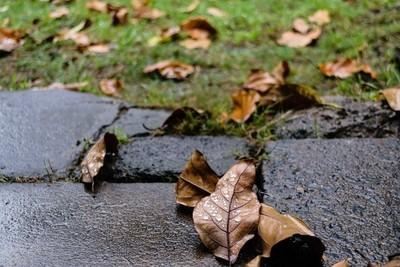 Rain Fallen Leaves