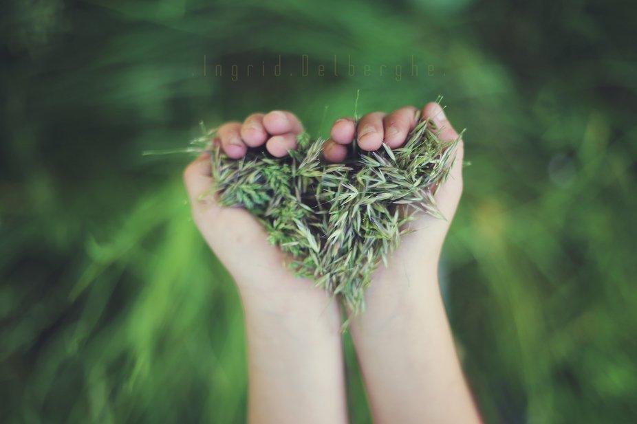 Love seeds
