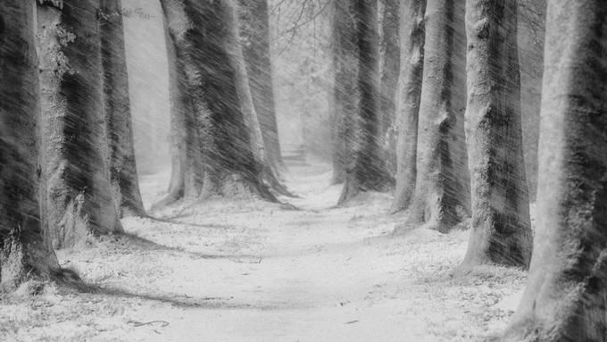 Frozen in Autumn by saskiadingemans - Wind In Nature Photo Contest