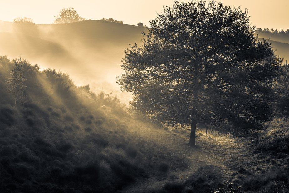 morning sunrays Dutch national park 'Veluwezoom'