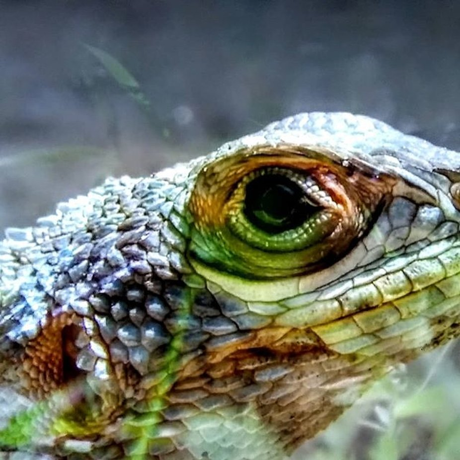 Your GettingThe Lizard Eye
