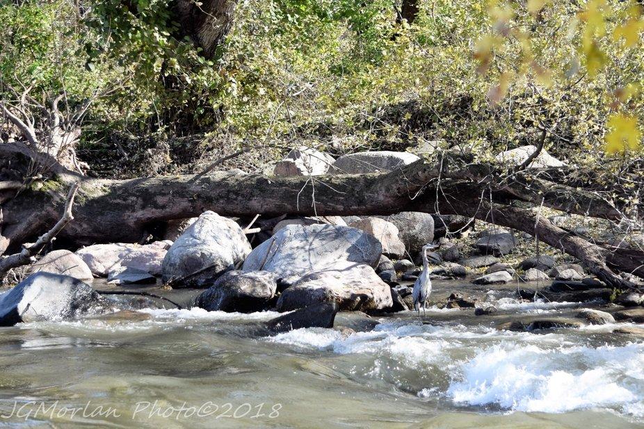 Rocks in the river create a mini rapids.