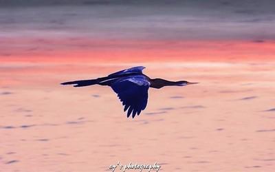 African Darter #photography #wildlifephotography #bird #birds #darter #netgeo #netgeowild #moment #photooftheday #nature #migration #birdsentuary #instagood #naturelovers #wildlife #photographer #naturephotography #picture #picoftheday #nikon #instagram #
