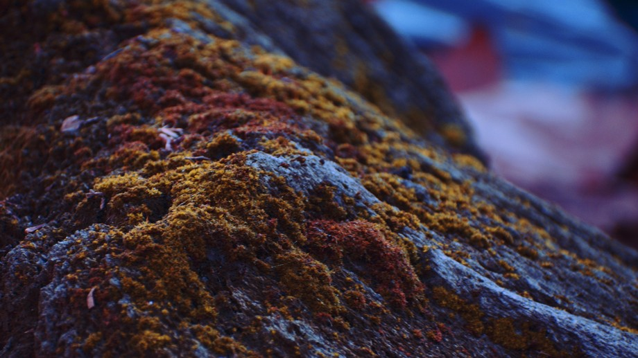 I took a photo of some moss that was on a rock, and I messed with the colors a bit.  Hope you lik...