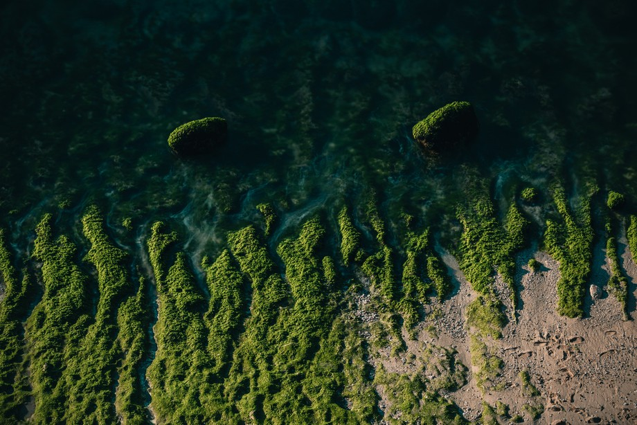 I like to take a photo like this. During low tide the coastline show to us the rocks with greenery