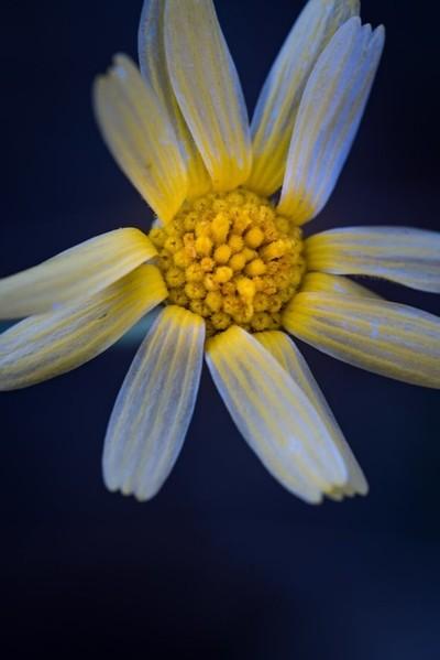 Yellow White Flower