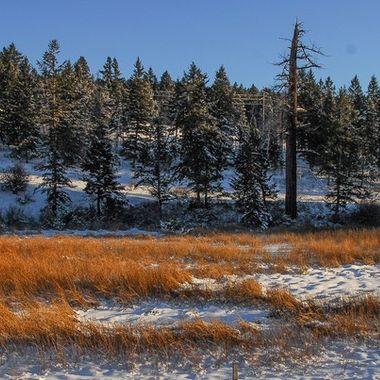 Mammit Lake Road between Merritt  and Logan Lake