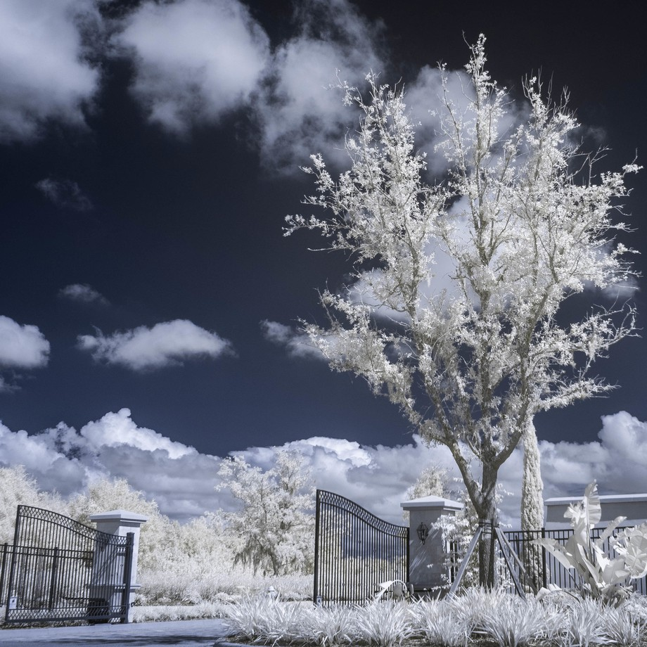 The tree by the gate - Infrared