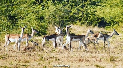 HEY look !! someone is taking our candid ;) #impala #wildlife #wildlifephotography #natgeo #nationalgeographic #nationalpark #deer #photography #photographer #photooftheday #pictureoftheday #forest #jungle #animal #animals #animallovers #instagood #instap