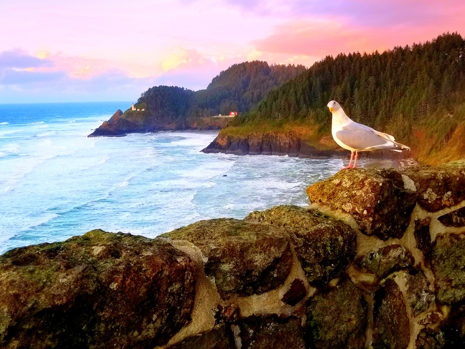 As the sun began to set, the grey, rainy sky brightened.  The clouds became colorful.  A seagull ...