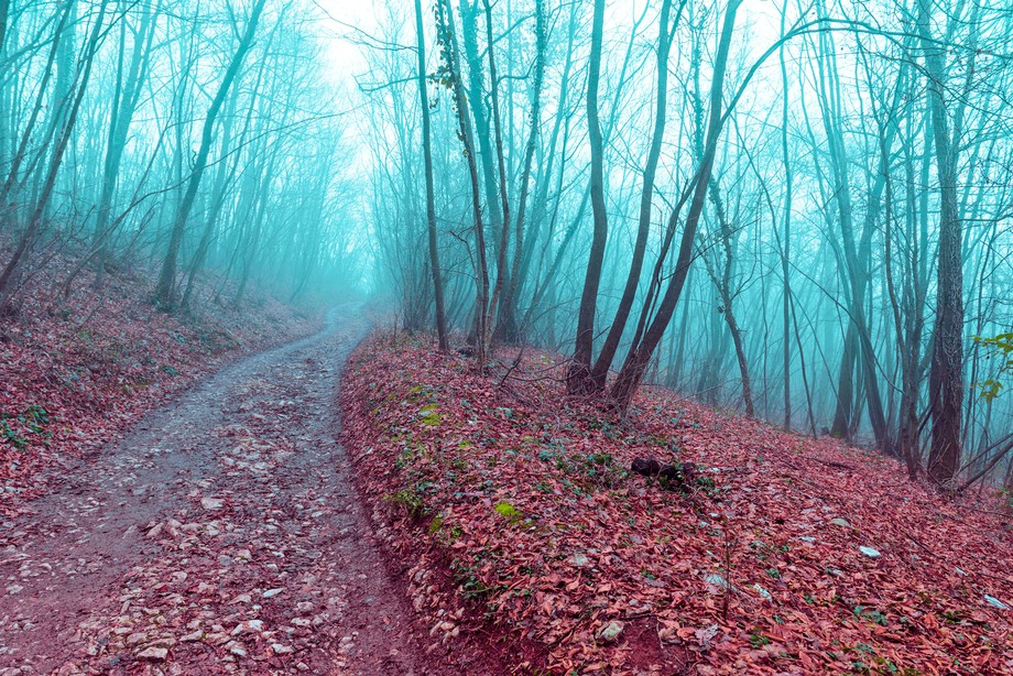 The path in the foggy forest