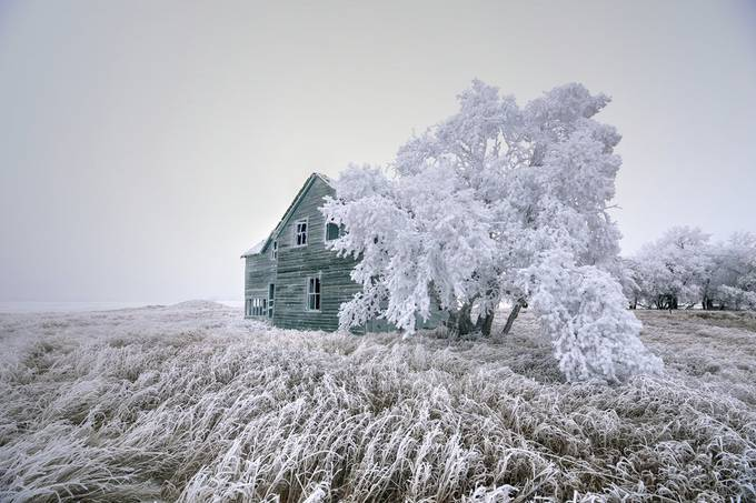 Frost by craigboehm - We Love The Winter Photo Contest