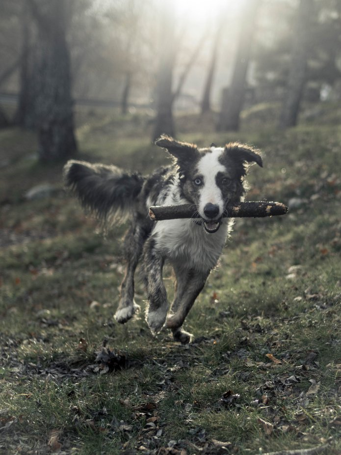 by DramaUnruly - Dogs In Action Photo Contest